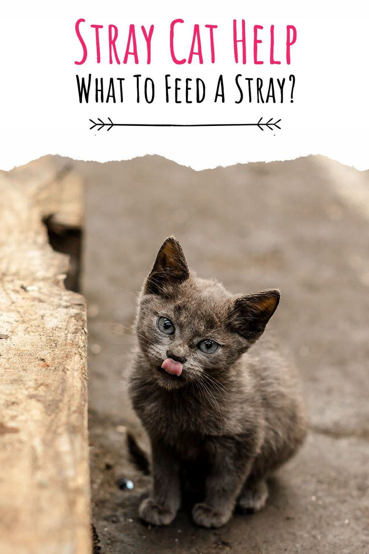 What To Feed A Stray Cat And How To Help Stray Cats And Kittens Survive In 2020 Cats Stray Cat Cat Care