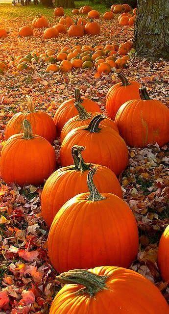 Pumpkins....They make me smile and evoke Fall sentiment