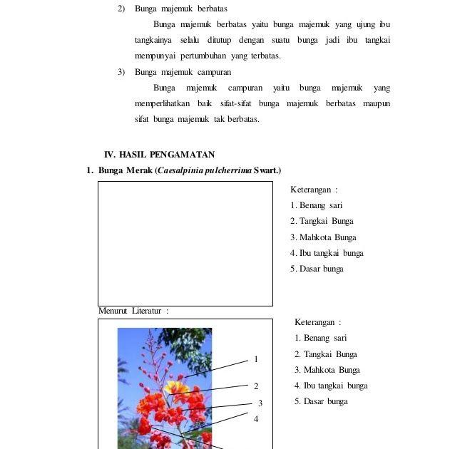 11 Gambar Bunga Sempurna Beserta Keterangan Laporan Praktikum 6 Bunga Majemuk Morfologi Tumbuhan Download Kembang Sepatu Pengertia Gambar Bunga Gambar Bunga