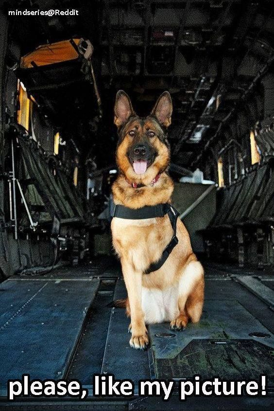 This is Lucca. Lucca is an amputee veteran who served six years in the U.S. Marine Corps as a Specialised Search Dog. TY Lucca xxx