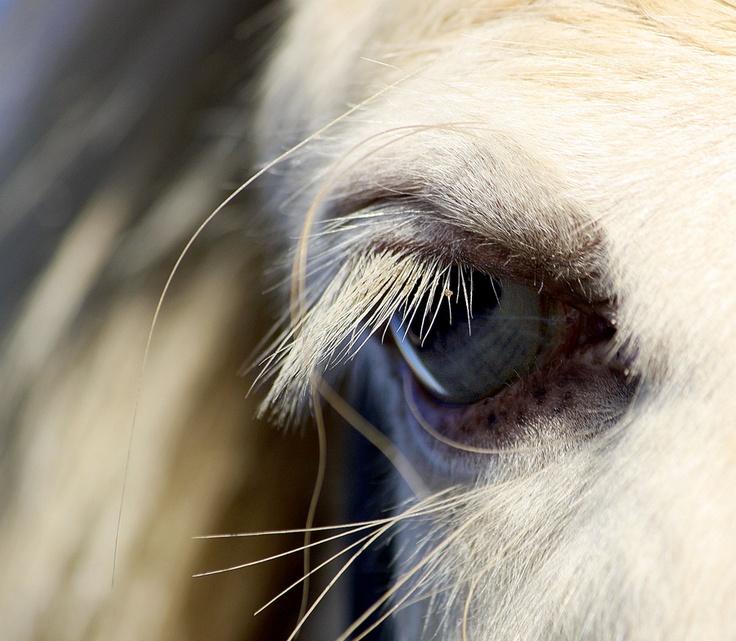 Best Horse Refrence Eyes Images On Pinterest Gems Horses - 24 detailed close ups of animal eyes