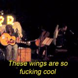 cool wings gif