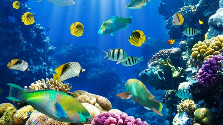Moving fish backgrounds free no downloads fish animal - Moving animal wallpapers ...