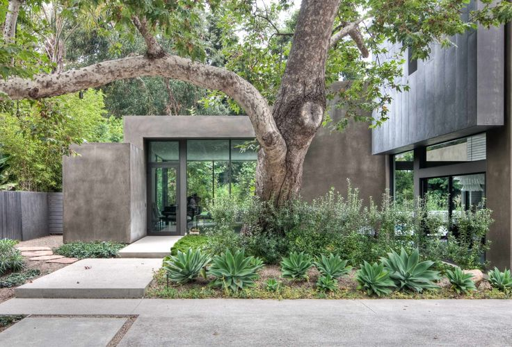 We like the way they incorporate the tree into the house and have a walking path.