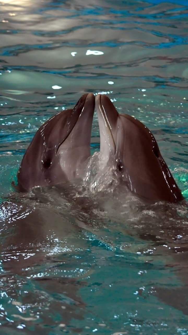 Pin By Designs By David On Dolphines Underwater Animals Ocean Creatures Marine Animals