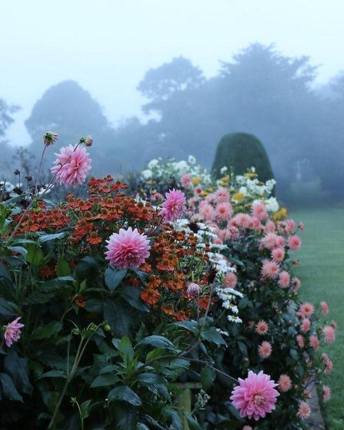 andantegrazioso: Misty english morning | fordeabbey