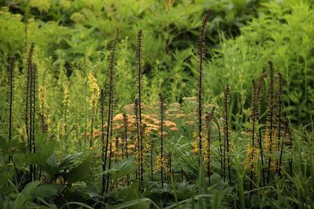 TuinTuin - weelderige tuin met warme kleuren