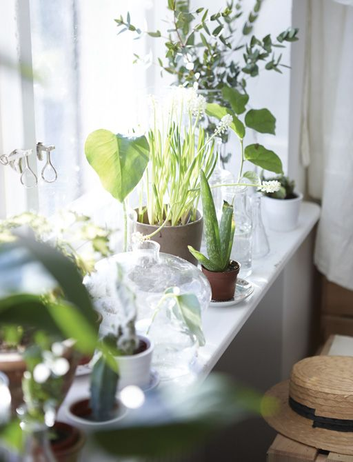 Make a natural windowsill plant display to bring some calm to your bedroom