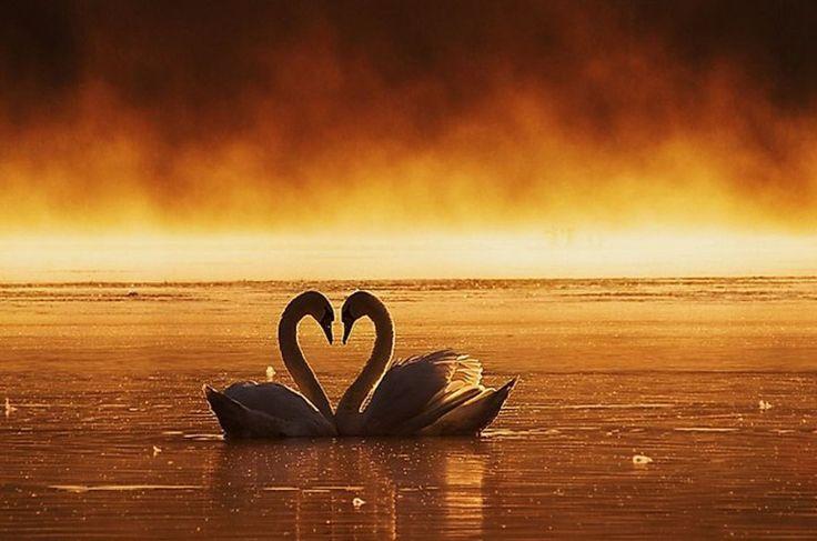 Obrázky láska | Pobavime.com