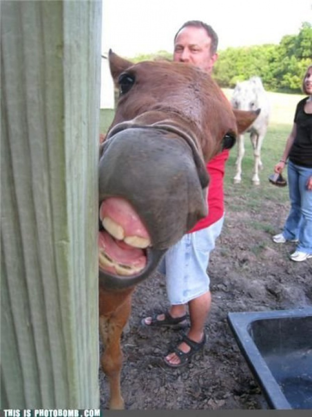 Best Photobombs Images On Pinterest And Still Animal - The 39 funniest animal photobombs of all time