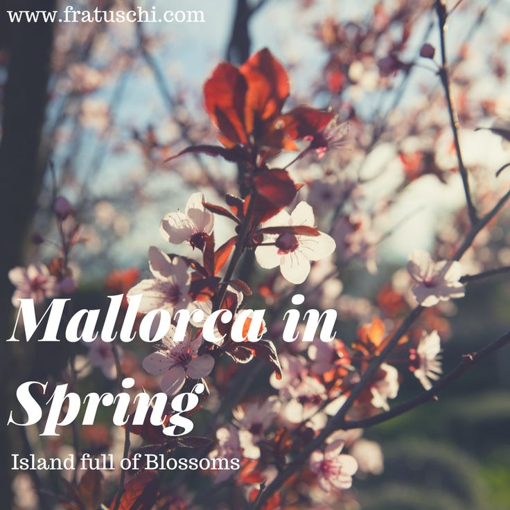 Mallorca in Spring – an island full of fragrances and blossoms. #Mallorca #Majorca in #Spring #Europe #Spain #Travel
