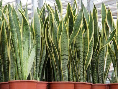 15 houseplants for improving indoor air quality   MNN - Mother Nature Network