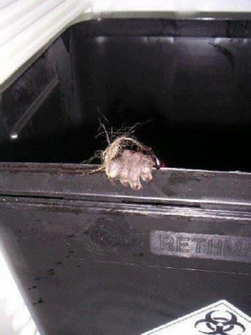 This is one of the most heartbreaking pictures I have seen about animal testing. The hand of an unknown monkey at a testing facility, grasping the side of the trash can after they discarded her for dead.  Many people believe Veganism is a diet. No, it is not. It is the belief that all animals  have the right to live out their full lives without being enslaved, encarcerated, exploited and killed without regard for what is right or fair.