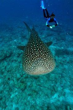 Chez Shoot for the Stars, on a une première passion: la plongée sous marine. Et vous ?