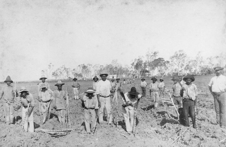 South Sea Islanders planting sugar cane at Seaforth Plantation at Ayr, Queensland | Flickr - Photo Sharing!