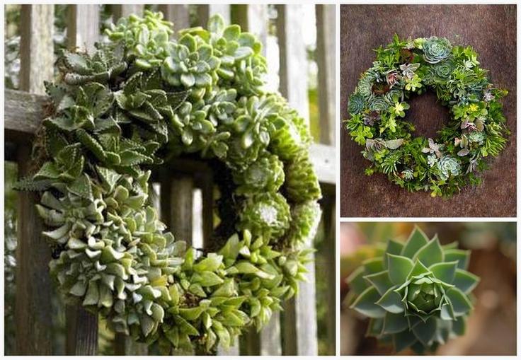 En Plantes Grasses Couronnes De Bienvenue Wreaths