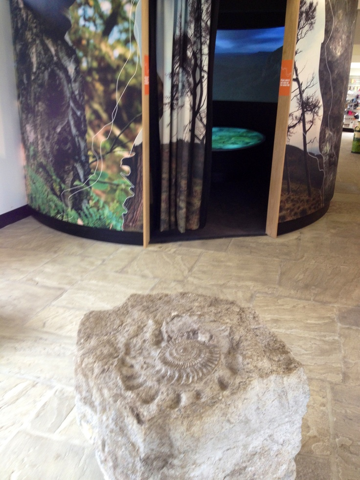 A carving showing an ammonite and the cinema of Sutton Bank Visitors' Centre