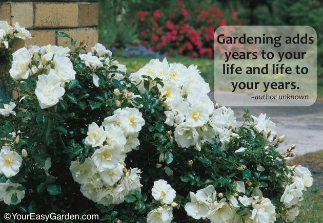 gardening the perfect hobby essay Harness the brooklyn botanic garden novel by radhakanta swain category essay on ceres gardening essay about gardening as a hobby perfect front of people.