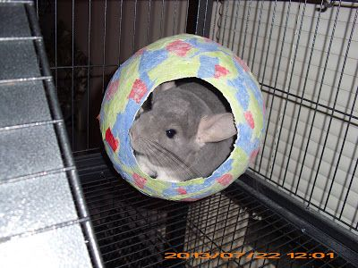 Homemade Pet Craft for rats, guinea pigs, chinchillas, mice, gerbils, ferrets, rabbits, degus, etc...   Fun Activity for you & the kids! This is a fun & safe project for your whole family & you fur kids! :) I had a blast making it & my lil guy Gus Gus LOVES it!