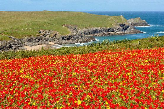 Summer flowers at Polly Joke, West Pentire, by Shaun Skinner