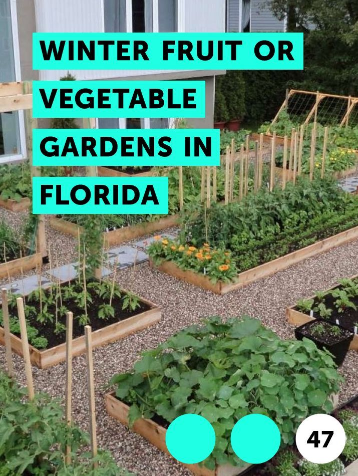 Learn Winter Fruit Or Vegetable Gardens In Florida How To Guides Tips And Tricks Winter Vegetables Gardening Florida Gardening Planting Pumpkins