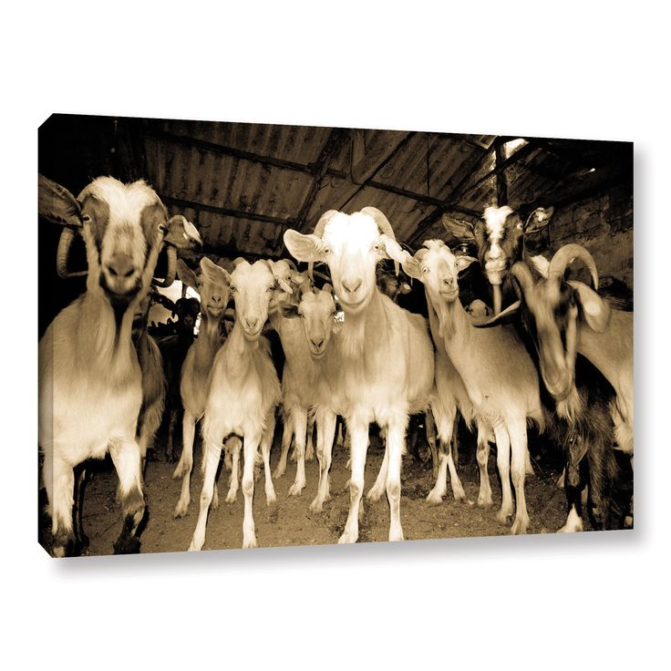 Andrew Lever's 'Goats Strike A Pose' Gallery Wrapped Canvas | Overstock.com Shopping - The Best Deals on Gallery Wrapped Canvas