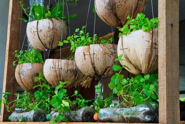 Vertical Gardening Watermelon