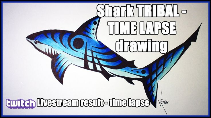 Shark TRIBAL - TIME LAPSE drawing