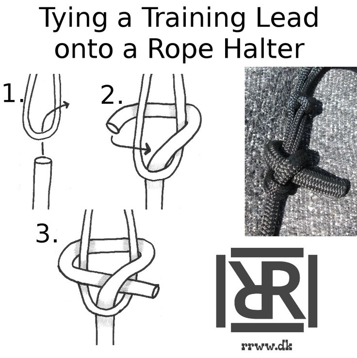 How to tie a lead without a clip or eye onto a rope halter.