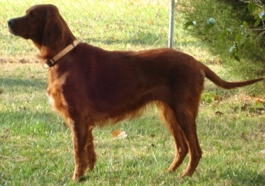 "Hello! My name is HEATHER and I am about four years old. This is a picture of me when I was picked up by animal control. Can you even tell that I am an Irish Setter?    You sure can tell now! Look below to see how pretty I am! I still have a lot of work to do to grow more hair, but I think it's a pretty darn good start, if I do say so myself!    I am a talker, and will ""Roo-Roo"" you to your heart's content. I will even talk to the cats here. I am very loving, and can be needy at times. I get…"