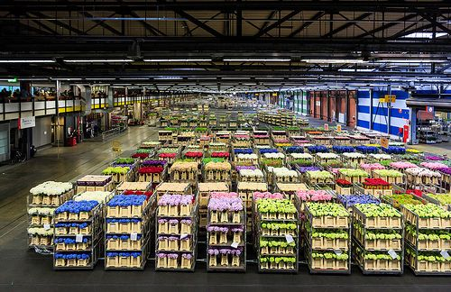 The Largest Flower Market in the World - Aalsmeer, Holland