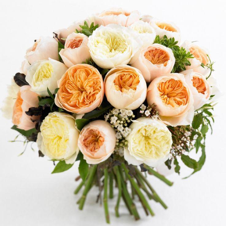 17 best images about flowers garden roses on pinterest juliet garden rose pink garden and. Black Bedroom Furniture Sets. Home Design Ideas