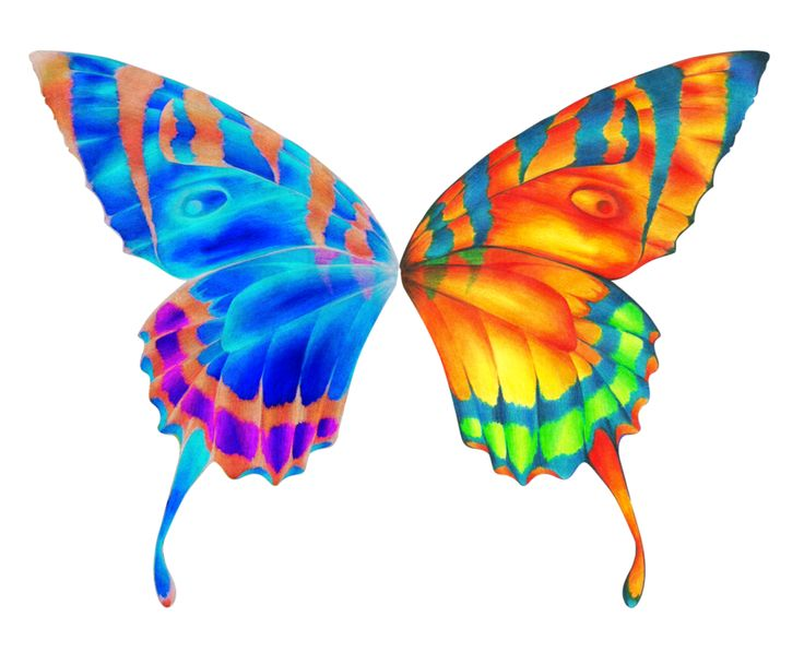 Butterfly Png More From Moonaftermidnight