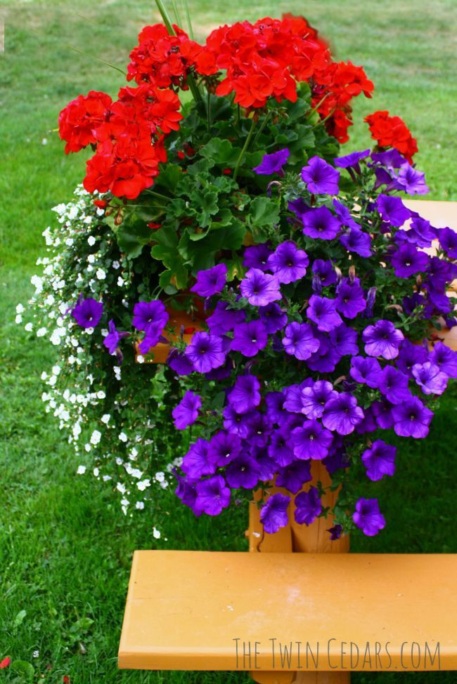 See amazing before and after photos from spring to summer plants. Includes a pin it image for an easy watering and fertilizing schedule.