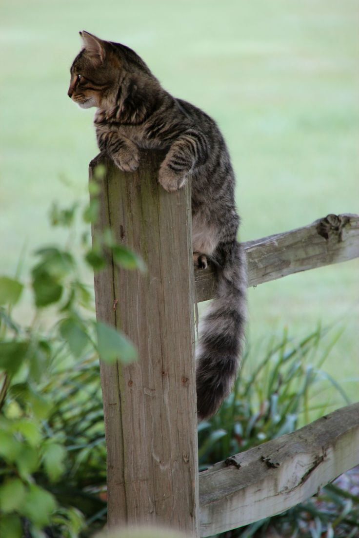 Image result for cat sitting up high on a fence  post