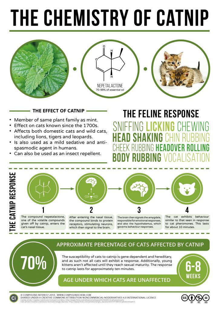 an experiment to determine the effects of catnip on cats But our preferences do not determine what's true  all life is an experiment  i will feel the resulting effects of that.