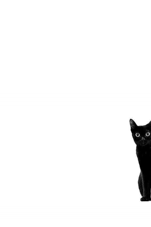 Pin By Melissa Frankford On La Familia Cat Art Cat Wallpaper Cat Drawing Black and white wallpaper cat