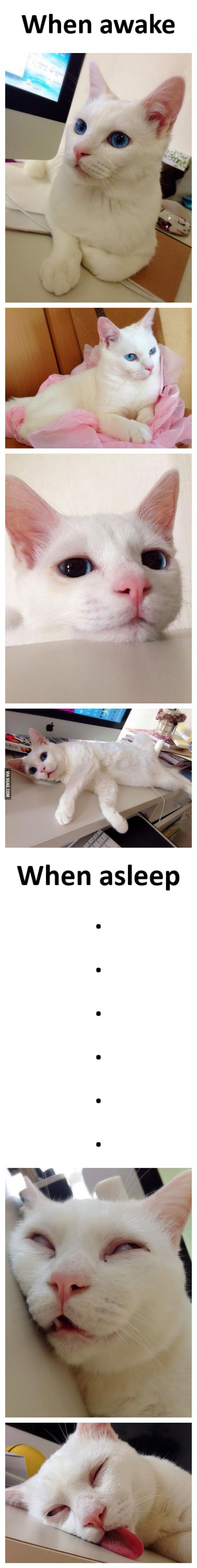 This is how a cat sleeps
