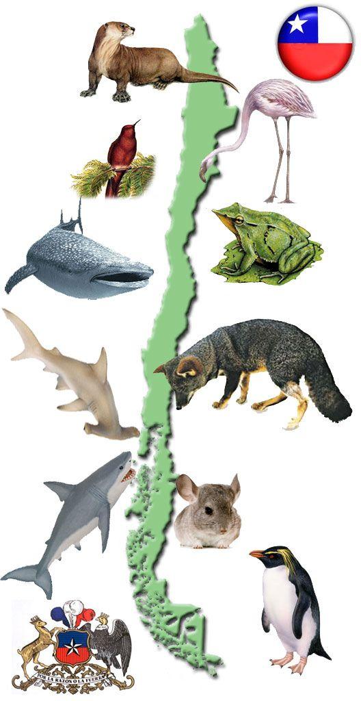 Animales extintos y en peligro de extinción en Chile