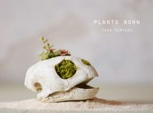 plants born (sea turtle)