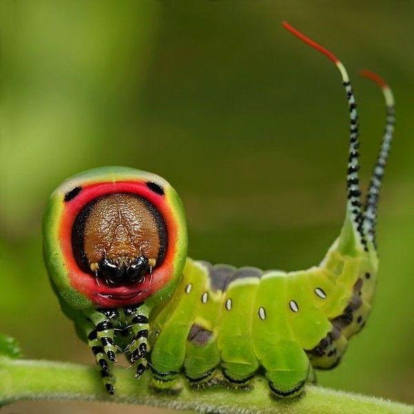 Amazing caterpillar