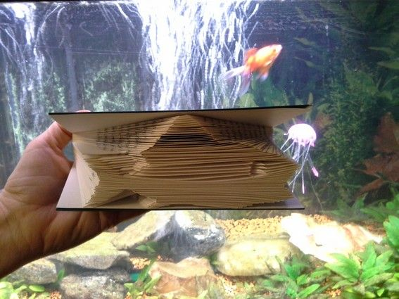 livre plie poisson (2)