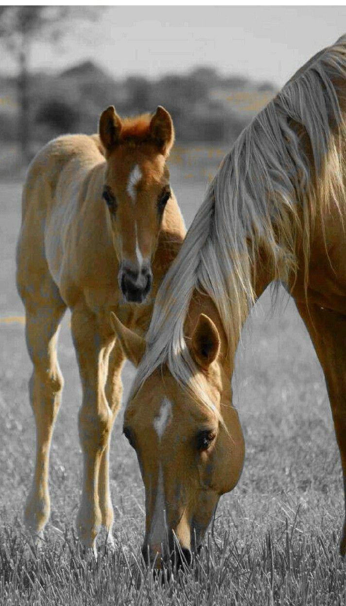 Pin By Shataia Franklin On Horse Baby Horses Animals Beautiful Pretty Horses
