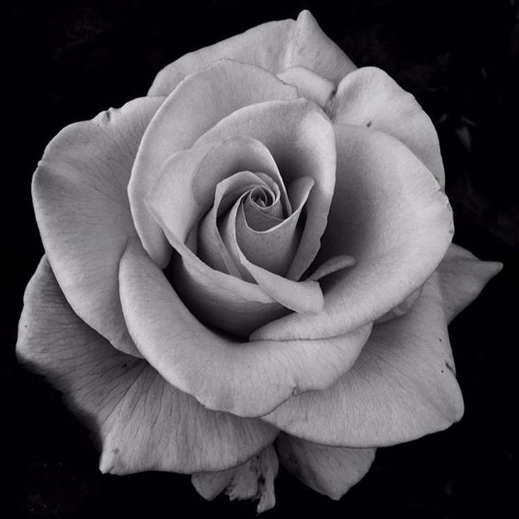 Чёрная и белая роза