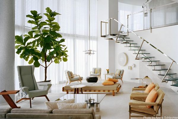 """A Ficus lyrata tree in a Miami home by designer Joe Serrins. Via the Wall Street Journal's """"Enter Stage Left: The Giant Indoor Tree"""". Photo by Annie Schlechter."""