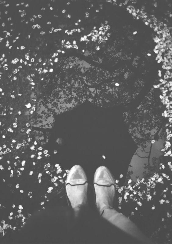 その他ハーフカメラ - 桜雨 -  桜  雨  春  モノクロ  トイラボ  - Camera Talk -