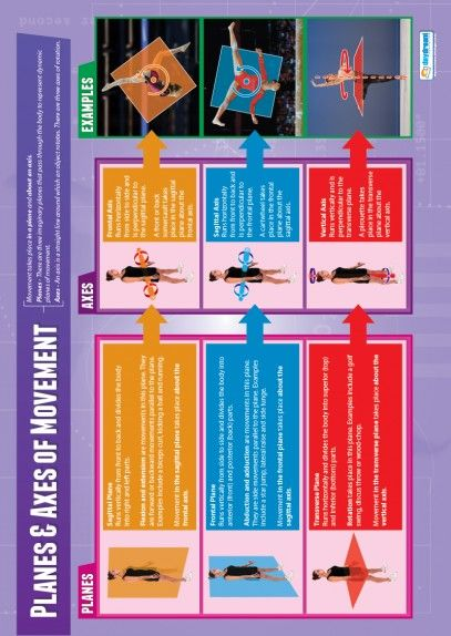 Planes and Axes of Movements Poster