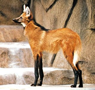 10 Weird Animals From Around The World