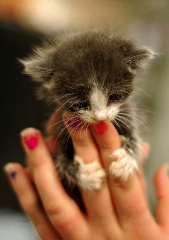Cute Cats List Cute Black And White Kittens For Sale Above Cute Newborn Kittens Meowing Above Cute Cartoon A Cute Baby Cats Kittens Cutest Cutest Kittens Ever
