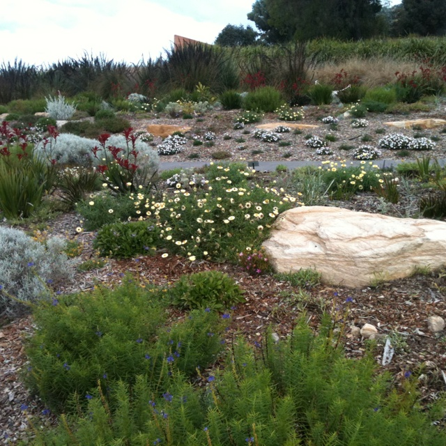 Australian natives at Mt Annan botanic gardens